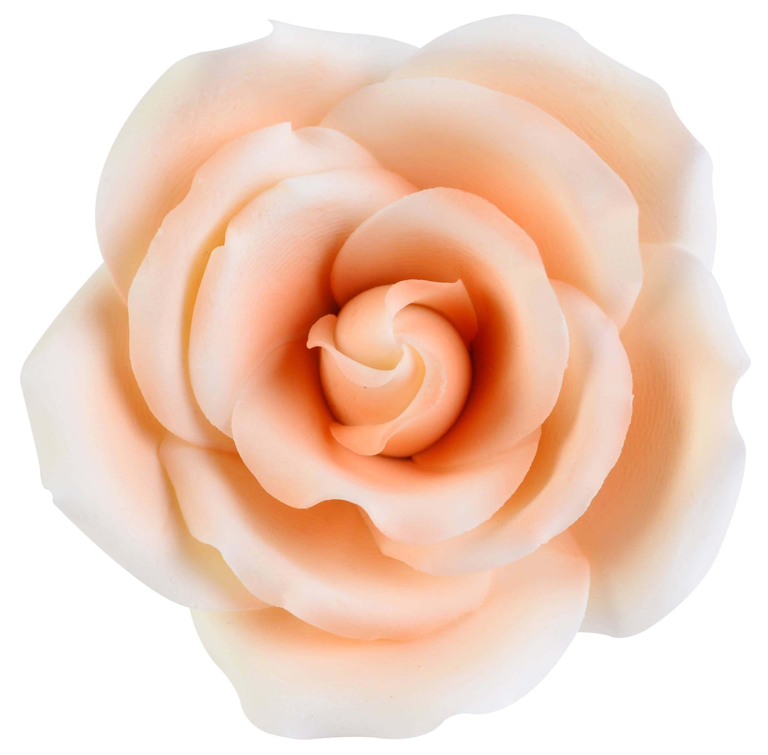 Fil De Peche Rose fleur rose pêche dégradé 5,5 cm - planete gateau - cake design