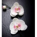 Veineur pour Pétales de fleurs Orchidée