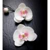 Veineur pour Pétales de fleurs