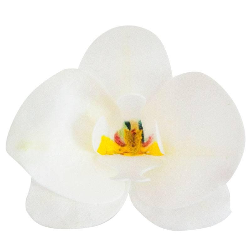 10 fleurs Orchidées blanche en azyme 8,5 cm