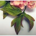 Emporte-pièces feuilles de pivoine - 3 formes