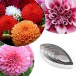 Set de 3 piezas florales takeaway Flor de orquídea